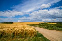 Rád külterület, búzatábla (Detti & Gábor) Tags: magyarország rád búza táj hungary wheat landscape