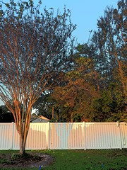 P9190779 (photos-by-sherm) Tags: hurricane florence recovery trees debris chain saws cutting wilmington nc north carolina coast fall