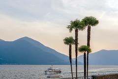 Lake Maggiore (Bephep2010) Tags: 2018 7markiii alpha ascona berg boot ilce7m3 lagomaggiore lakemaggiore palme sel24105g schweiz see sommer sony switzerland tessin ticino tragflügelboot boat hydrofoil lake mountain palm summer ⍺7iii ch