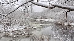 Looking up the creek.... (Steve InMichigan) Tags: creek snowycreek snowscene snow water stream winterscene autochinon28mmf28lens fotasym42eosmlensadapter