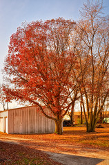 Fading Fast (kendoman26) Tags: hdr aurorahdr2019 autumn autumncolors fall fallcolors fallcolor nikon nikond7100 nikon35mm