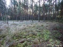 Tohloppi (PeepeT) Tags: metsä luontokuvaus naturephotography tampere tohloppi syksy autumn marraskuu november