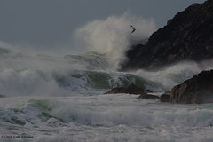 3KA10128a_C_2018-11-17 (Kernowfile) Tags: cornwall cornish waves poldhucove thelizardpeninsula breakingwaves spray foam rocks cliffs gull sky pentax