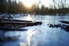 Icy shoreline (Stefano Rugolo) Tags: stefanorugolo pentax k5 pentaxk5 kepcorautowideanglemc28mm128 kmount ricohimaging ice shoreline water lake closeup lowangle pov abstract backlight reeds depthoffield lensflares flares manualfocuslens manual vintagelens manualfocus pof reflection