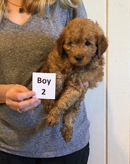 Darby Boy 2 12-16