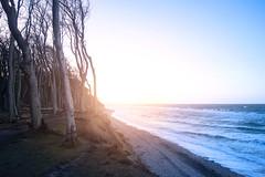 Nienhagen (martha hoo) Tags: nienhagen gespensterwald wasser water balticsea ostsee mecklenburgvorpommern steilküste germany deutschland sunset sommenuntergang einter