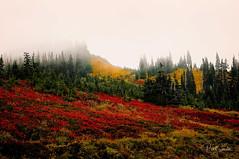 Rainier Fall (Photocalvi) Tags: 2009 mtrainier mtrainiernationalpark photovia flowers landscape mountains