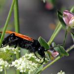 Hunting tarantulas thumbnail