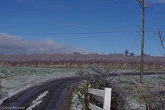 Rockbridge county (davekrovetz) Tags: vineyard grapes wine contryside winter scenery ice pentax pentaxk70 k70 virginia shenandoah