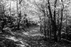 Upland Trail (Neal3K) Tags: ir infraredcamera kolarivisionblueirndvifilter henrycountyga georgia cubihatchaoutdooreducationcenter henrycountywaterauthority