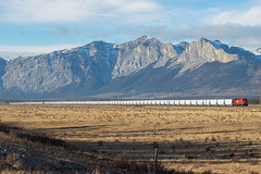 Stretched out at Ozada (Going Trackside Photography) Tags: canadian pacific railway canada cp cpr cprail beaver alberta mountains grain train explore prairie laggan subdivision
