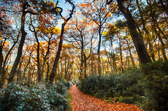 """fine art autumn colours, a path winds through a sun dappled wood - Bois du Breuil, Forest of Breuil, near Honfleur, Calvados, Normandie, France (grumpybaldprof) Tags: canon 70d """"canon70d"""" sigma 1020 1020mm f456 """"sigma1020mmf456dchsm"""" """"wideangle"""" ultrawide """"fineart"""" ethereal striking artistic interpretation impressionist stylistic style contrast shadow bright dark black white illuminated colour colours colourful """"boisdubreuil"""" """"forestofbreuil"""" honfleur normandy calvados france vasouy penndepie conservation """"conservatoiredulittoral"""" rhododendrons """"coastalconservancy"""" bois forest trees deciduous coniferous wood woods coastline """"dukesofnormandy"""" french kings """"philippeauguste"""" breuil wildlife wildboar """"pinemarten"""" """"redfox"""" deer """"forestwalk"""" landscape branches leaves shapes patterns path autumn autumncolours sun dappled"""