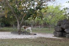2016-03-29_14-14-34_anonEOS70_29387003_Audrey (Miguel Discart (Photos Vrac)) Tags: 2016 canon canoncanoneos70d canoncanoneos70defs1855mmf3556isstm canoneos70d efs1855mmf3556isstm iso1250 miami miamizoo travel unitedstate us vacances zoo