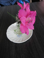 Flower on the table (jamica1) Tags: salmon arm shuswap bc british columbia canada flower