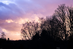 Embroidery of black trees (kiareimages1) Tags: sunsets sky trees colors belgium charleroi nature winter clouds