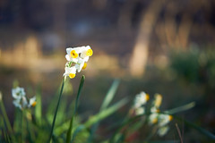 Soft focus (KaeriRin) Tags: japan spring winter january sun nature green forest tree flowers shinjuku gyoen park sony alpha sony7m2 7mii zeiss 55mm18
