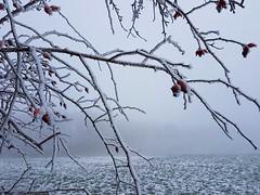 (claudine6677) Tags: winter eis schnee nebel reif ice fog hoarfrost frosty trees bäume