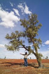 Waddi Trees. photo credit Tourism and Events Queensland (Big Red Bash) Tags: birdsville talent tree waddi