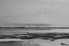 dark stars bright sky (Mindaugas Buivydas) Tags: lietuva lithuania bw spring march minimal minimalism bird birds delta nemunasdelta plaškiai favoriteplaces mindaugasbuivydas