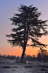 Winter sunrise! (Nina_Ali) Tags: sunrise bradgatepark nature backlight silhouette winter2019