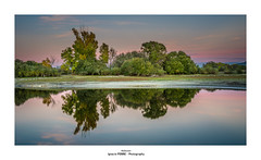 Reflection (Ignacio Ferre) Tags: embalsedesantillana santillanareservoir manzanareselreal madrid españa spain nikon paisaje landscape reflejo reflection agua water árboles trees sunset puestadesol naturaleza nature ngc