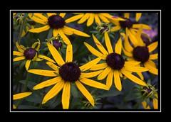 Dark Centre (Audrey A Jackson) Tags: canon60d bamburgh northumberland nature colour