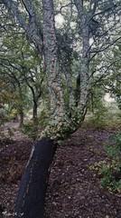 Paseando, paseando (pedroramfra91) Tags: naturaleza nature arboles trees exteriores outdoors verde green