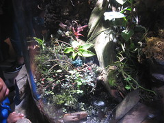 Poison dart frogs (rasputina2) Tags: longbeach aquariumofthepacific poison dart frog