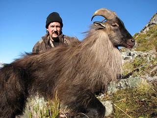 New Zealand Free Range Hunting - Marlborough 54
