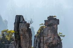 Rocks of Zhangjiajie (pietkagab) Tags: zhangjiajie national forest park wulingyuan karst formation formations rock avatar landscape hunan china mountains mountain daylight blue backpacking background asia asian pietkagab photography pentax pentaxk5ii piotrgaborek travel trip tourism trekking trek adventure hike holidays hiking h