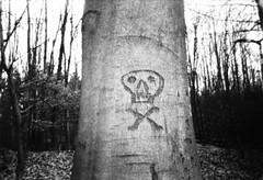 danger II [disposable camera experiment] (ericgrhs) Tags: tree baum skull totenkopf wald forest woods winter trees einwegkamera laub foliage leaves bw schwarzweis disposablecamera singleusecamera film edited