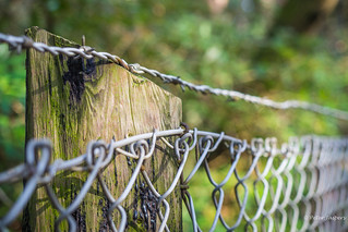 Don't be afraid of the barbed wire in life, it keeps the bad out and the good in