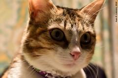 Cassie (Juan R. Lascorz) Tags: haustier haustiere pets mascotas animauxdecompagnie animaldecompagnie