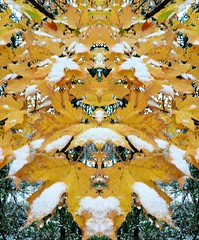 HSoS ~ Pareidolia edition (karma (Karen)) Tags: baltimore maryland leaves fallcolors mirroredit pareidolia smileonsaturday hsos facelikepatterns topf25