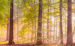 Brightness (Jenne Barneveld) Tags: brightness bright light wood forest tree trees nature naturephotography autumn morning morningwalk walk mood mystical enchaned fairyworld netherlands