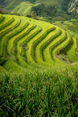 Rice terraces of Longji (Piyush Bedi) Tags: longji rice terrace terraces farming rural china chinese levels farm paddy paddies green asia fuji fujifilm xt1 outdoors nature landscape travel