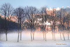 Eglinton Park Snow Trees3 (g crawford) Tags: eglintonpark eglinton crawford ayrshire northayrshire kilwinning snow winter frost sky weather yellow orange sunset sundowntrees