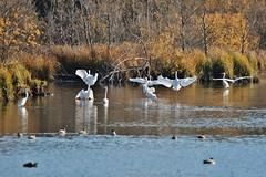 Birds (Hugo von Schreck) Tags: hugovonschreck birds vögel herons reiher see lake canoneos5dmarkiii tamronsp150600mmf563divcusda011