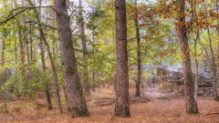(Philippe Vieux-Jeanton) Tags: fontainebleau forest foret france sel18135 2018