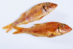 Smoked fish surmullet (wuestenigel) Tags: mullet seafood smoked cooking dish eat healthy red tasty food fish meal mediterranean cuisine gourmet lunch delicious nutrition fresh sea diet surmullet fisch noperson keineperson meeresfrüchte lebensmittel fin ende desktop carp karpfen one ein animal tier meer underwater unterwasser dinner abendessen tail schwanz nature natur mahlzeit köstlich color farbe closeup nahansicht gesund gold
