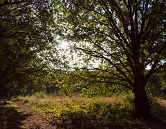 2018_10_0278 (petermit2) Tags: autumn pottericcarr potteric doncaster southyorkshire yorkshire yorkshirewildlifetrust wildlifetrust ywt
