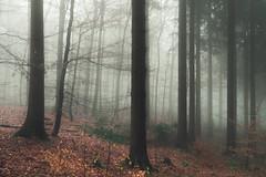 Sadness loves the Eifel (Netsrak) Tags: baum eu europa europe flickr forst januar january landschaft natur nebel wald fog forest landscape mist nature tree trees winter woods bäume