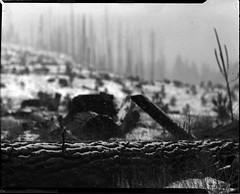 snow on a log on 4x5 film (Garrett Meyers) Tags: graflexseriesd4x5 garrettmeyers garrett meyers largeformat landscape lf graflex graflex4x5 outdoors snow blackandwhitefilm film filmphotographer