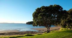 0788 (Daniel Menzies) Tags: landscape beach fujixe1 fujixf1855mm grass water ocean sea bluesky sky bay harbour trees