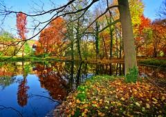 Colors all around.... (Tobi_2008) Tags: herbst autumn fall teich pond spiegelung reflection bäume trees sachsen saxony deutschland germany allemagne