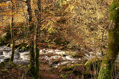 Forest of copper and gold (chairman.bill) Tags: river exmoor devon riverlyn autumn fall