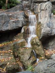 Waterfall, Central Park Zoo, New York City (jag9889) Tags: 2018 20181112 cp cascade centralpark centralparkzoo landmark manhattan ny nyc nycparks newyork newyorkcity outdoor park rock stream usa unitedstates unitedstatesofamerica waterfall zoo jag9889