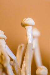 Abstract Table (Thomas Hawk) Tags: abstracttable abstracttablepopup america bayarea california eastbay gastropig oakland sfbayarea us usa unitedstates unitedstatesofamerica westcoast mushroom soup fav10
