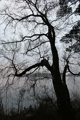 Wood (thor_thomsen) Tags: storestokkavannet stavanger norway monochrome tree silouette lake fog landscape