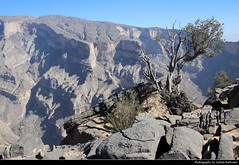 Jebel Shams, Oman (JH_1982) Tags: jebel shams jabal جبل شمس dschabal schams djebel 沙姆山 シャムス山 эшшам al hajar mountains جِـبَـال الْـحَـجَـر grand canyon nature natur landscape scenery scenic vertigo vertical tree edge climbing hiking elevation schlucht mountain berge gebirge oman sultanate سلطنة عُمان sultanat sultanato omán 阿曼 オマーン 오만 оман